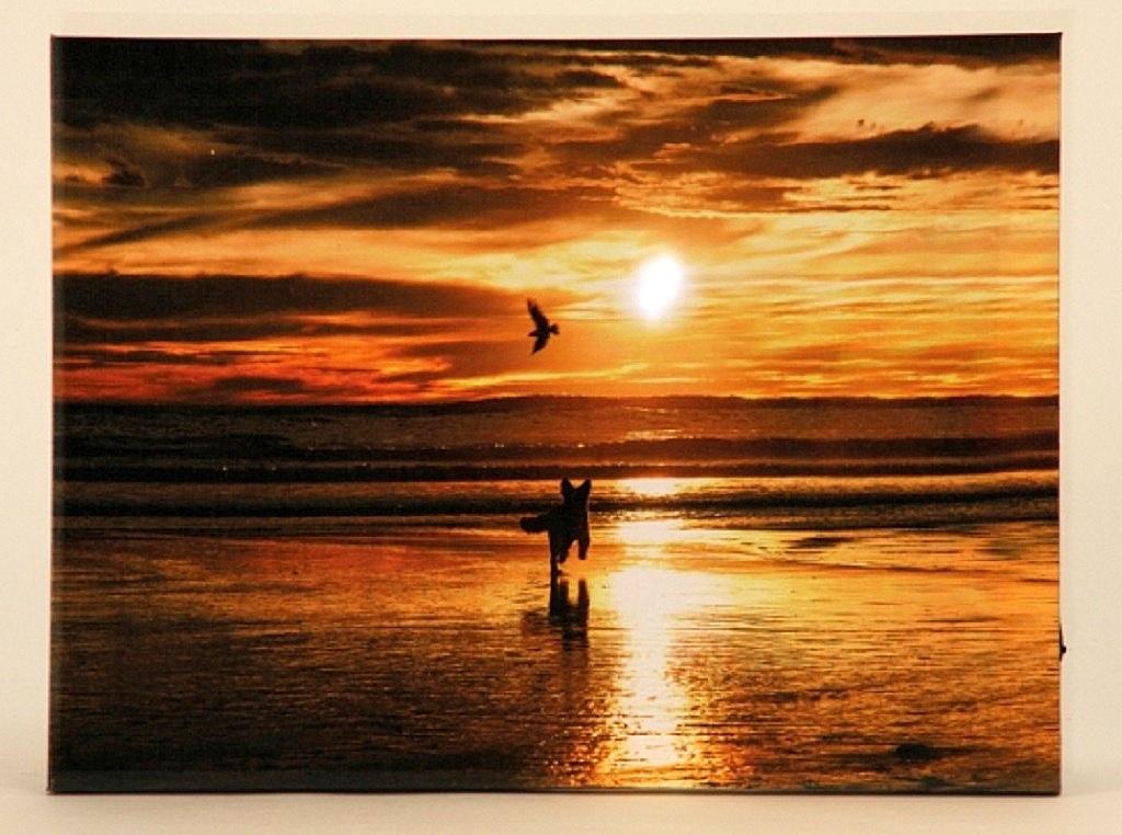 wandbild led beleuchtet sonnenuntergang am strand mit hund. Black Bedroom Furniture Sets. Home Design Ideas