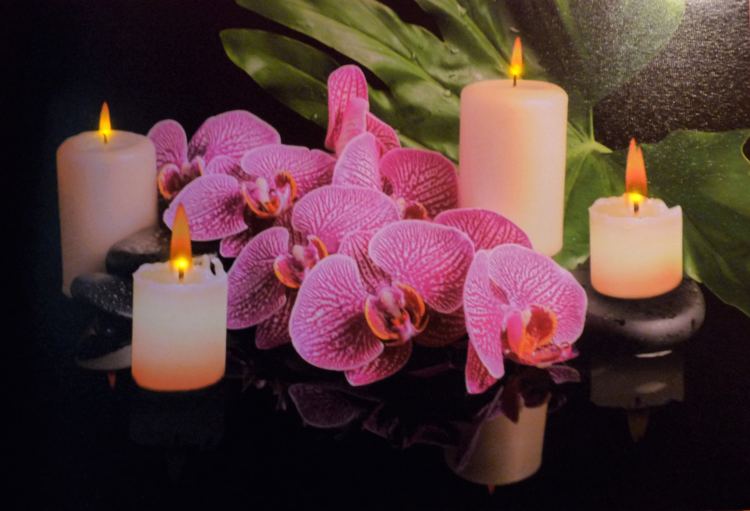 Wandbild Orchidee beleuchtet